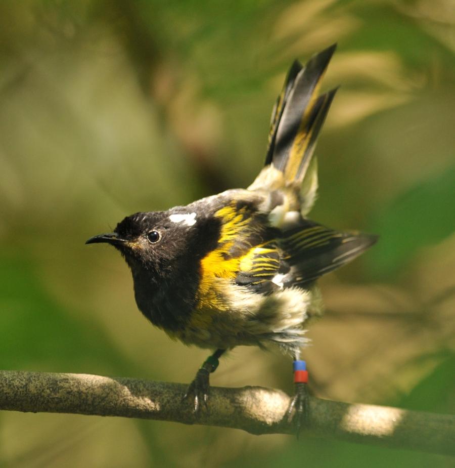 stitchbird-tiri-jan15-version-2