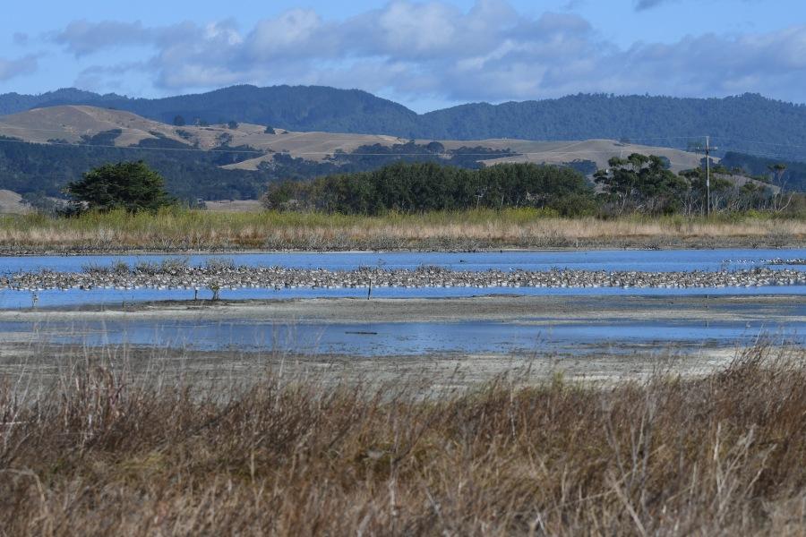 NZ miranda vista2.jpg