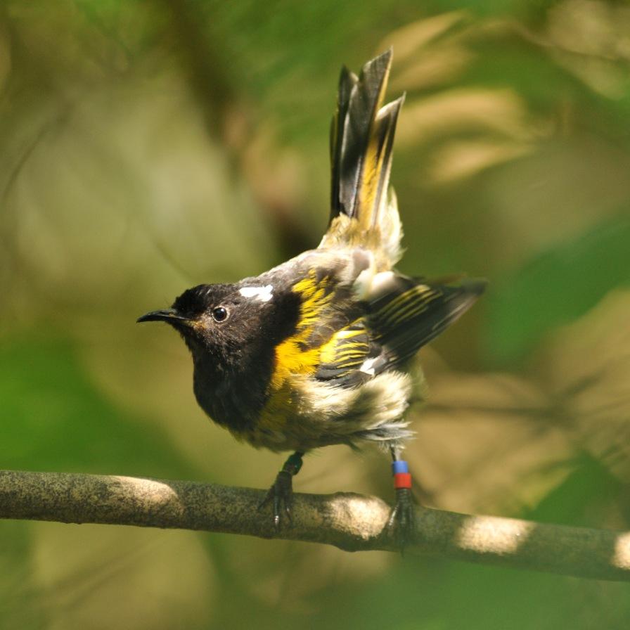 stitchbird tiri jan'15