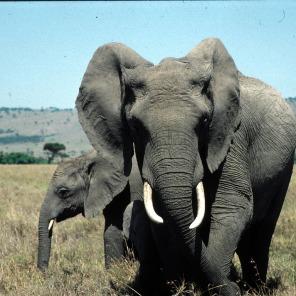 elephant03